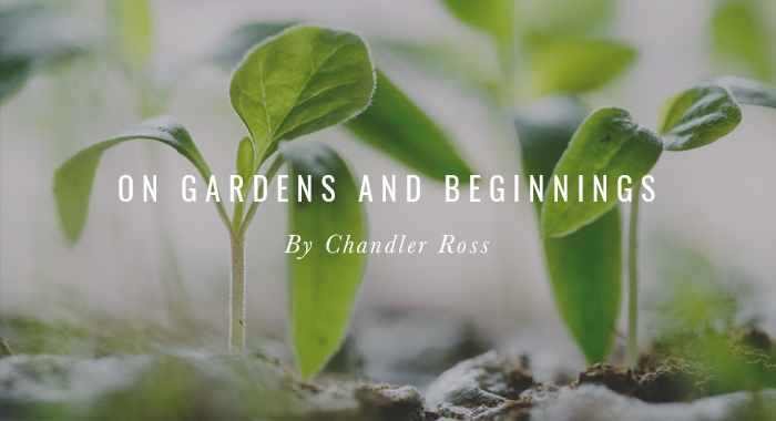 On Gardens and Beginnings