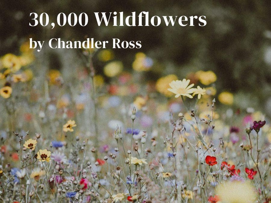 30,000 Wildflowers